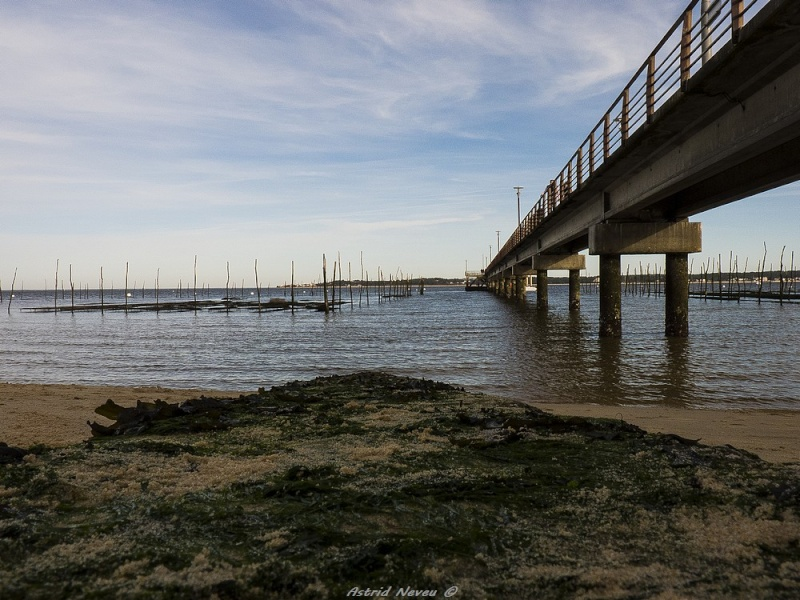 Entre océan, érosion, bassin et mimosa (Rando Cap Ferret - 23/02/14) P1130923