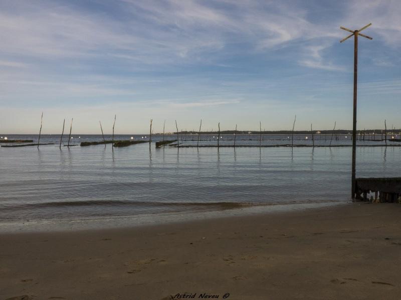 Entre océan, érosion, bassin et mimosa (Rando Cap Ferret - 23/02/14) P1130925