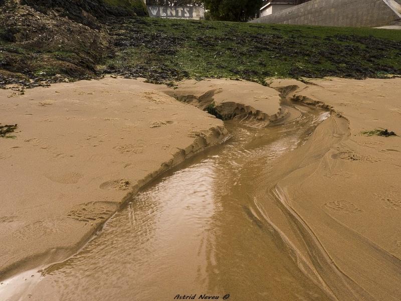 Entre océan, érosion, bassin et mimosa (Rando Cap Ferret - 23/02/14) P1130926