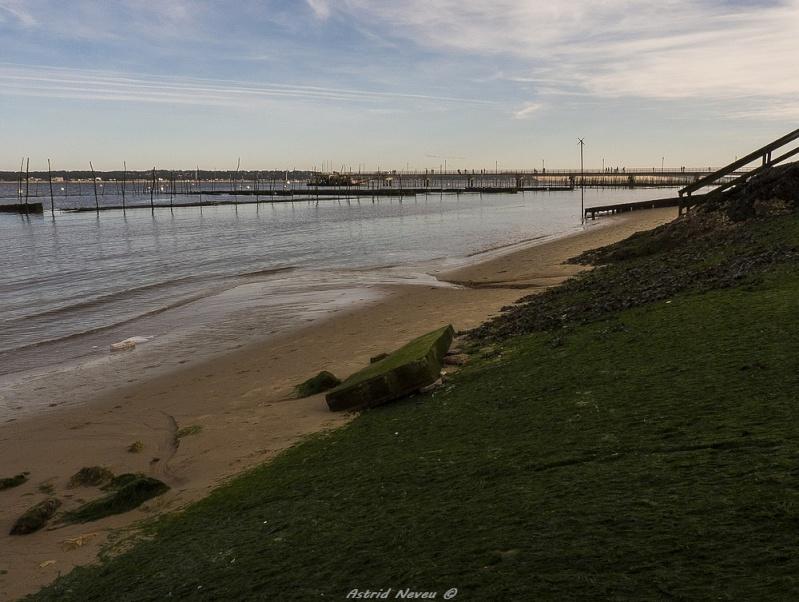 Entre océan, érosion, bassin et mimosa (Rando Cap Ferret - 23/02/14) P1130927