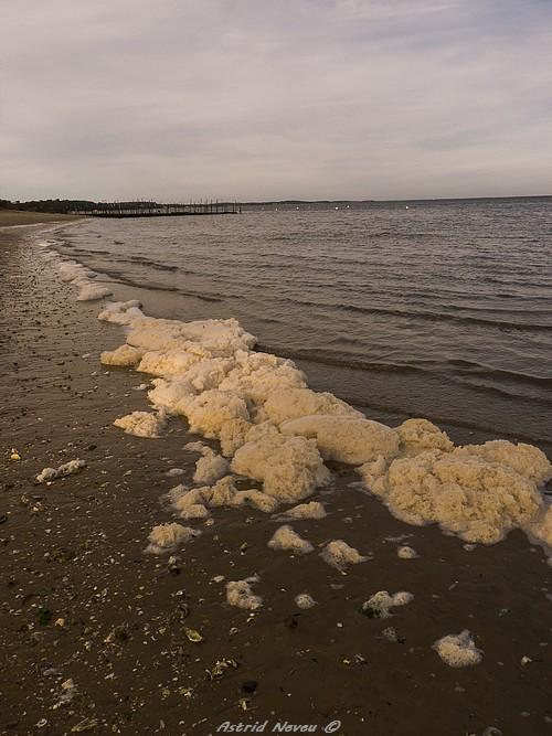 Entre océan, érosion, bassin et mimosa (Rando Cap Ferret - 23/02/14) P1130928