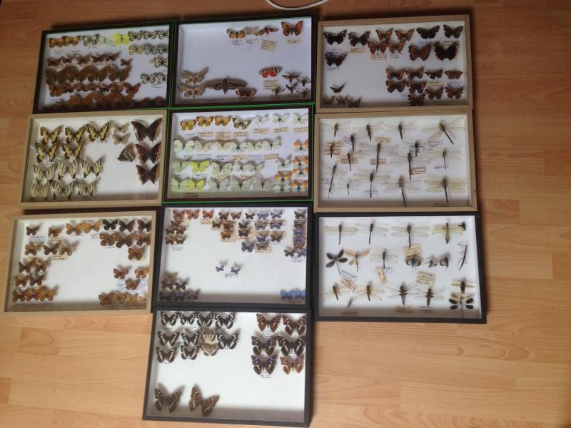 Présentation des collections Entomologiques - Page 6 Img_0028