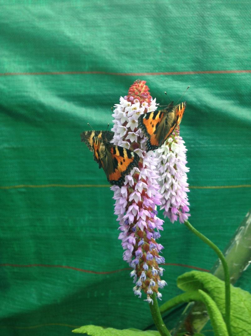 Serre à papillons. Img_0327