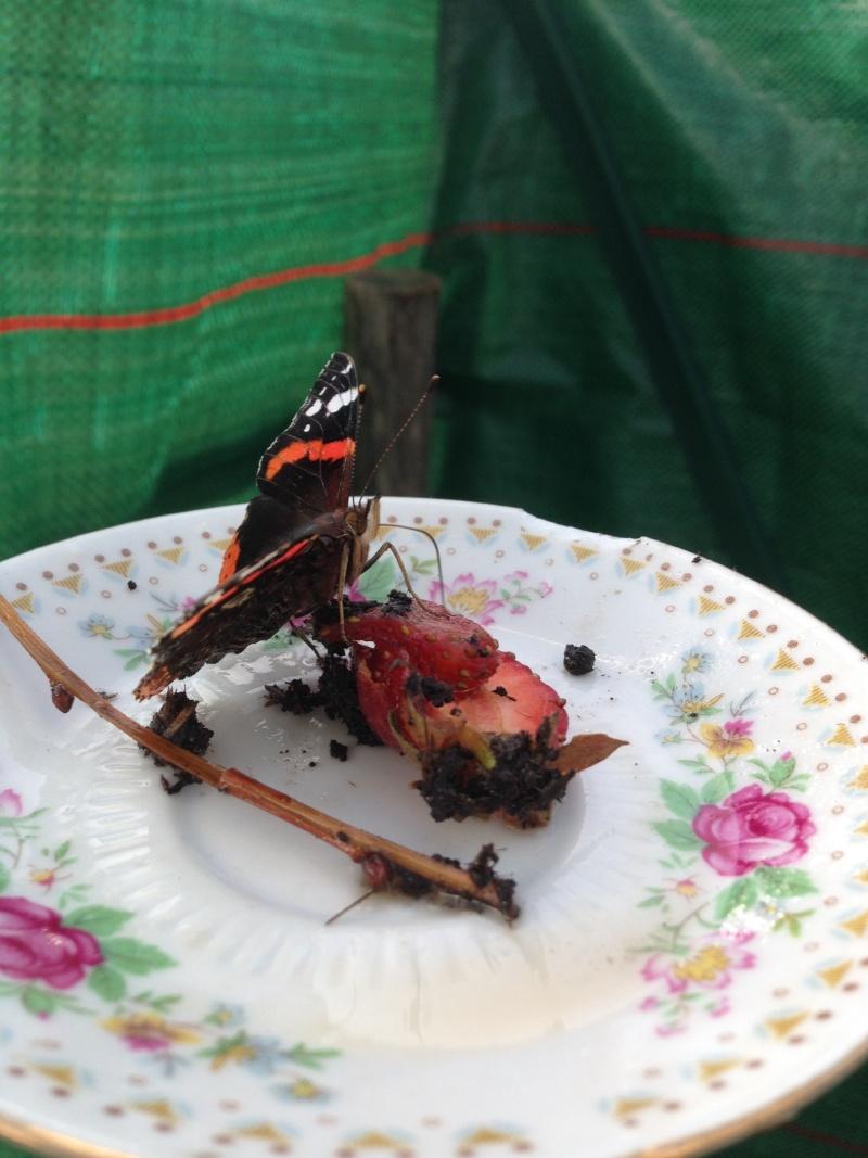 Serre à papillons. Img_0328