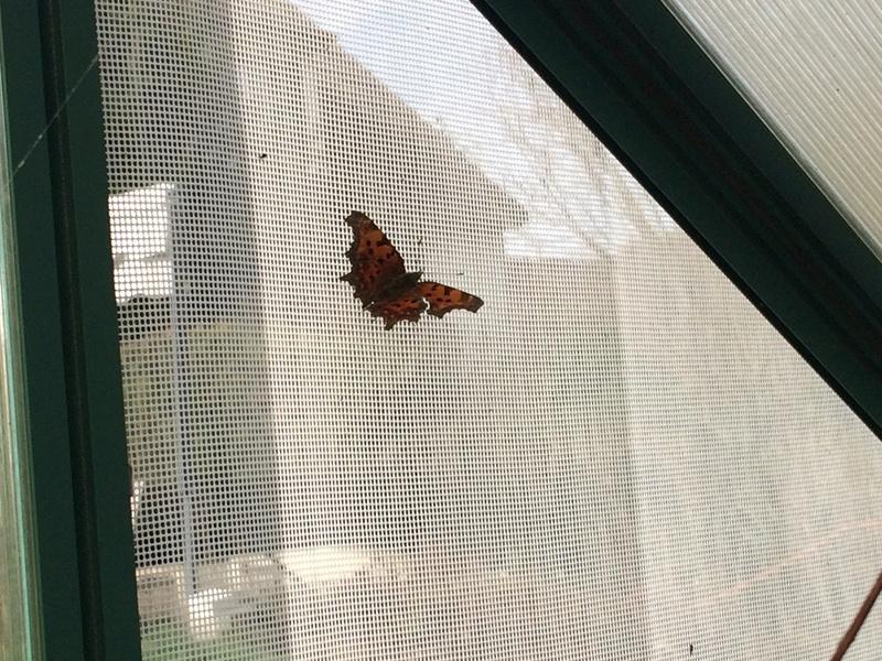 Serre à papillons. - Page 5 Img_2918
