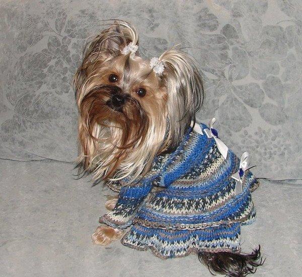 одежда для собак 110