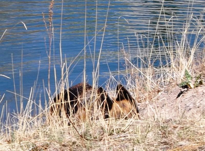 Мои собаки ! (немцы ,малинуа,хаски ,пины ,дог... - Страница 2 Dscf8719