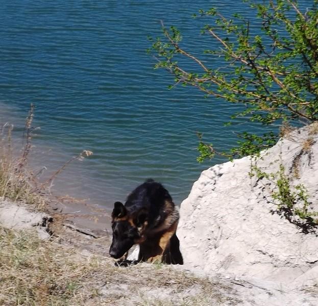 Мои собаки ! (немцы ,малинуа,хаски ,пины ,дог... - Страница 2 Dscf8727
