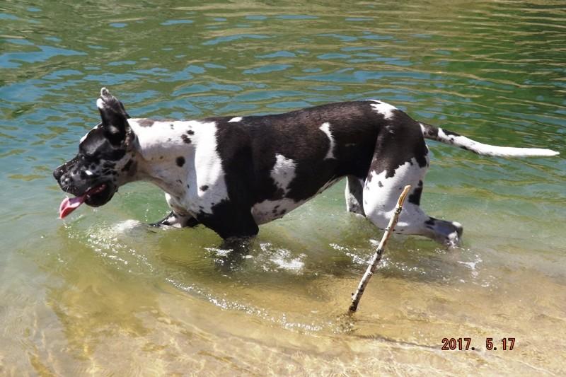 Мои собаки ! (немцы ,малинуа,хаски ,пины ,дог... - Страница 2 Dscf8736
