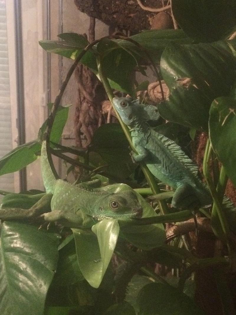 Ma famille de reptiles ! - Page 6 Img_4810
