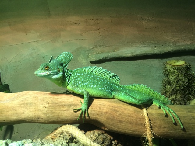 Ma famille de reptiles ! - Page 10 Img_5711