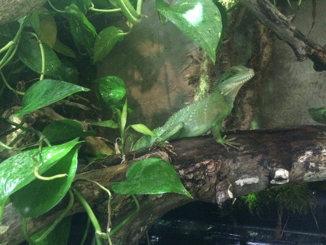 Ma famille de reptiles ! - Page 10 Img_5810
