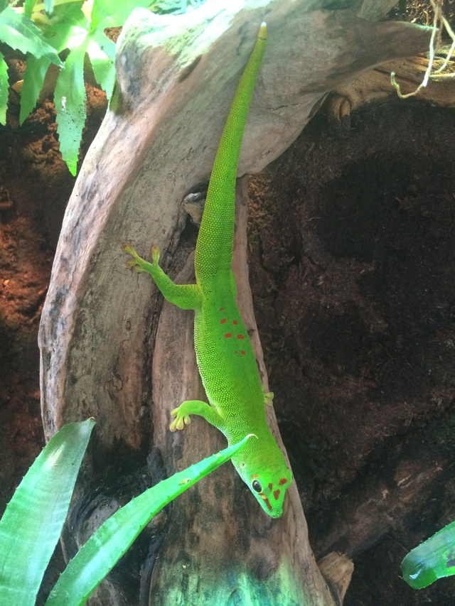 Ma famille de reptiles ! - Page 10 Img_5915