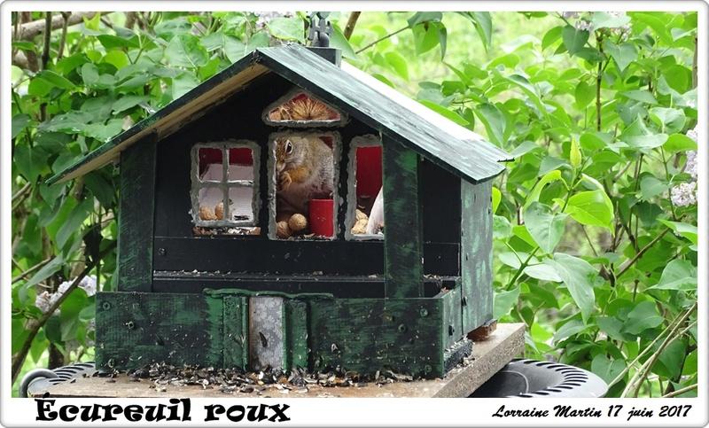 Triplex mangeoire recyclée  Maison12