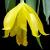 Autres Genres : Barkeria, Brassavola, Caularthron, Domingoa, Encyclia, Epidendrum, Leptotes, Myrmecophila, Prosthechea, Rhyncholaelia etc.