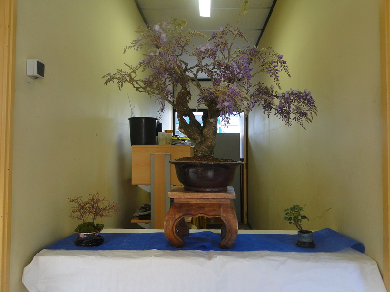 fête des plantes Merdrignac 2017  Dsc00918