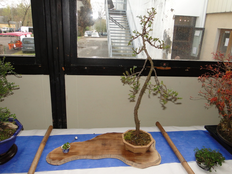 fête des plantes Merdrignac 2017  Dsc00924