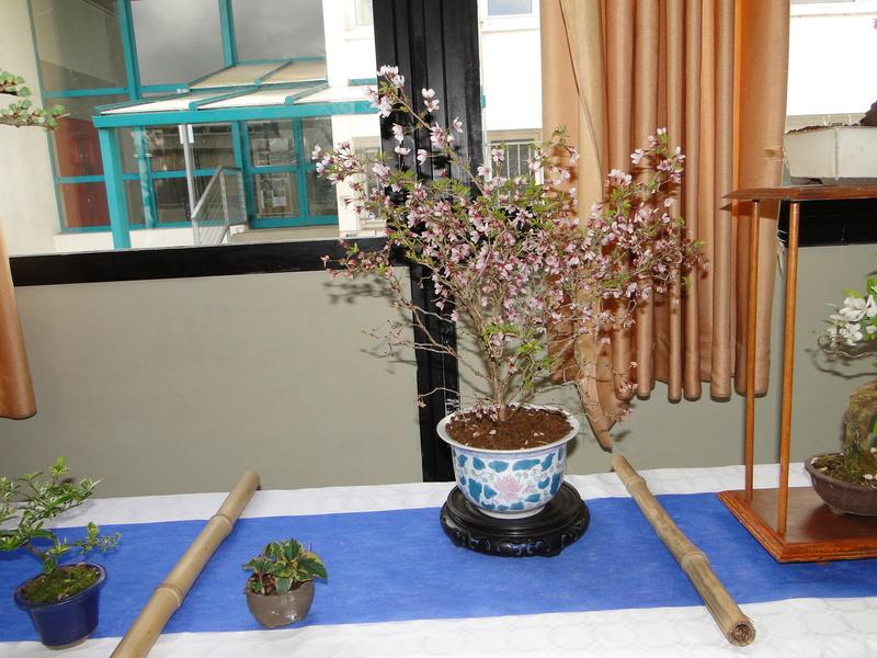 fête des plantes Merdrignac 2017  Dsc00931