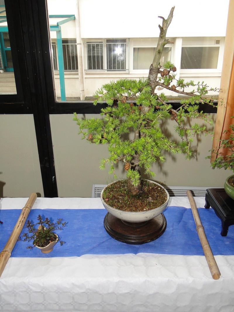 fête des plantes Merdrignac 2017  Dsc00933
