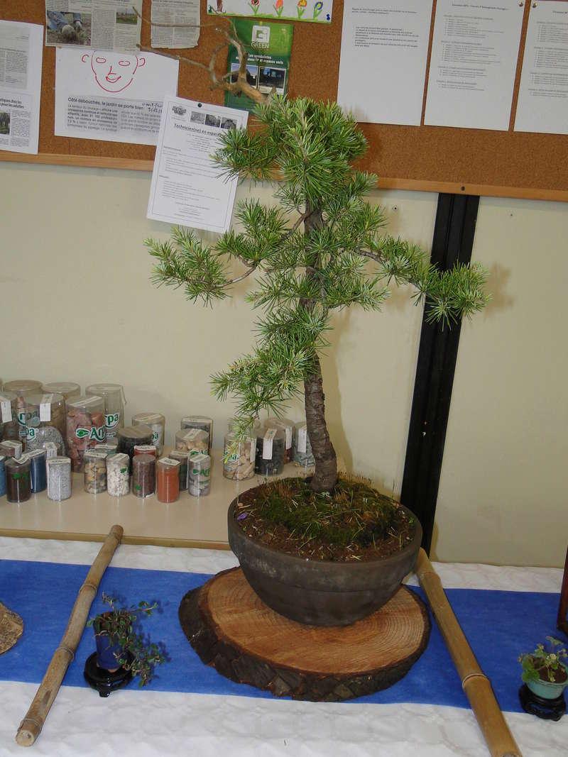 fête des plantes Merdrignac 2017  Dsc00936