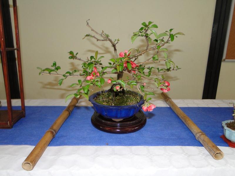 fête des plantes Merdrignac 2017  Dsc00937