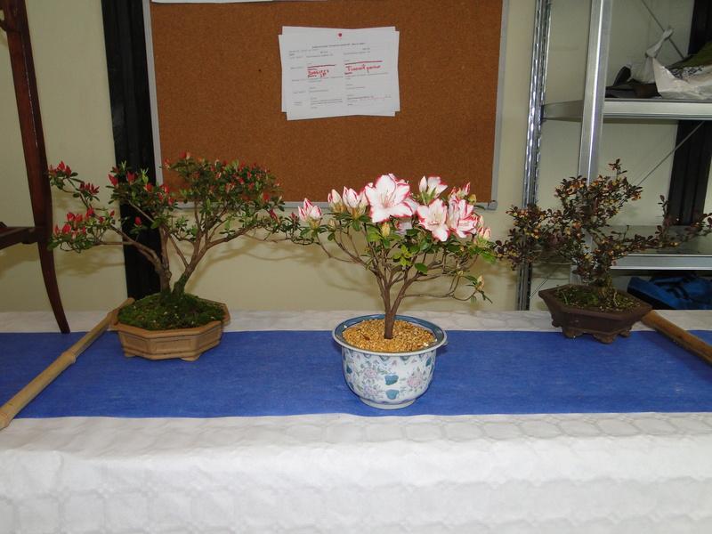 fête des plantes Merdrignac 2017  Dsc00940