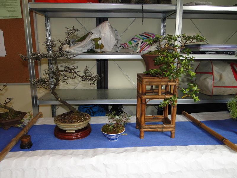fête des plantes Merdrignac 2017  Dsc00941