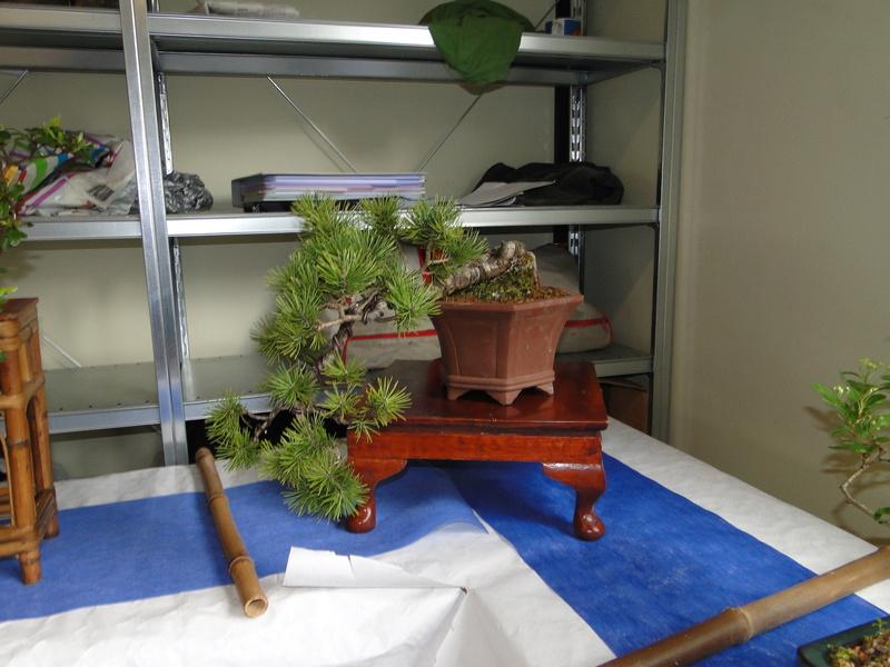 fête des plantes Merdrignac 2017  Dsc00942