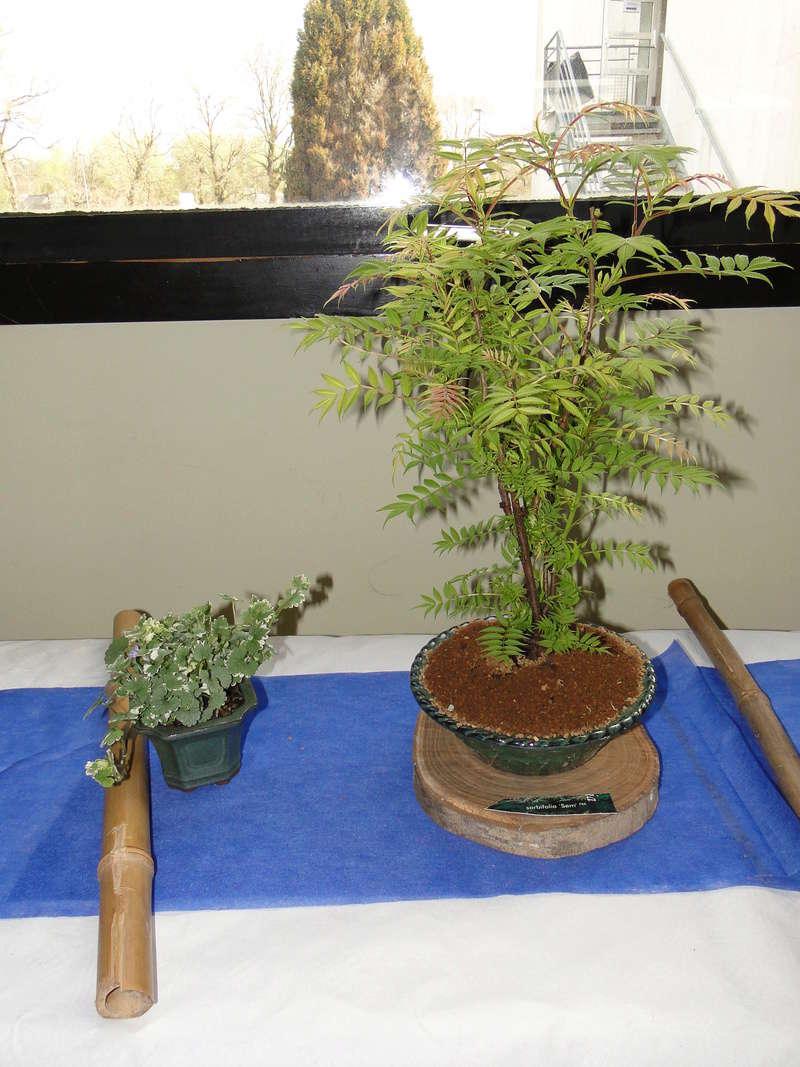 fête des plantes Merdrignac 2017  Dsc00943