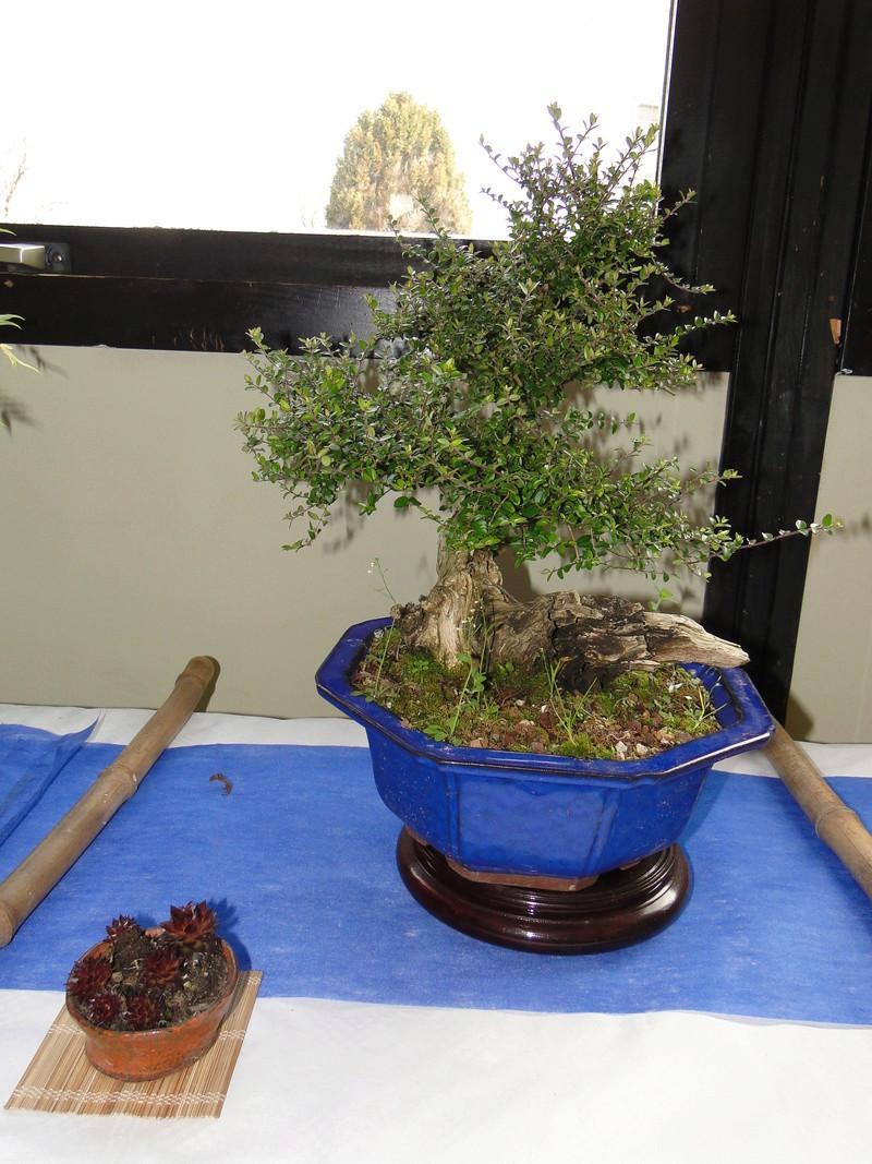 fête des plantes Merdrignac 2017  Dsc00944