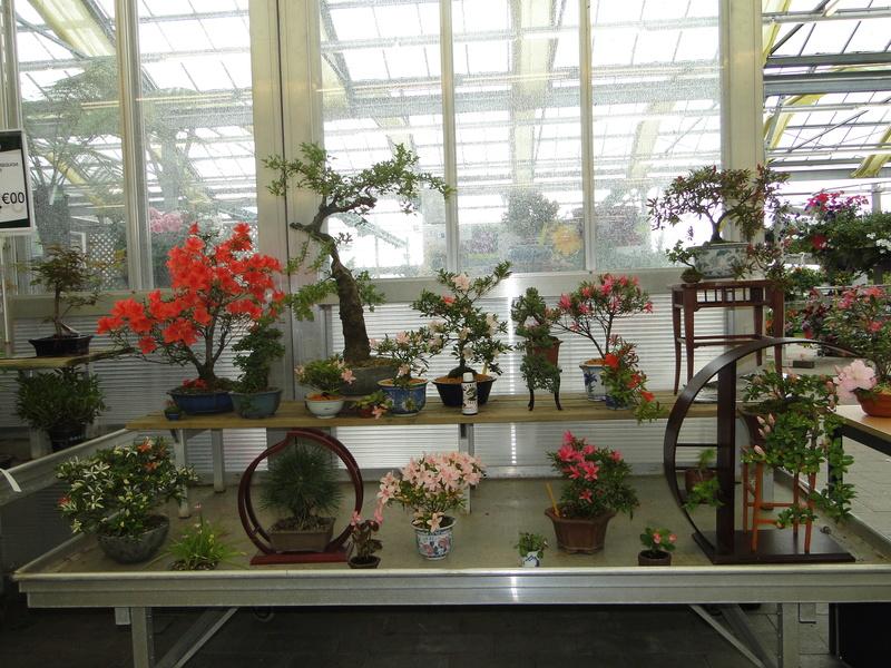 satsuki flower trophy 3  - Page 2 Dsc01426
