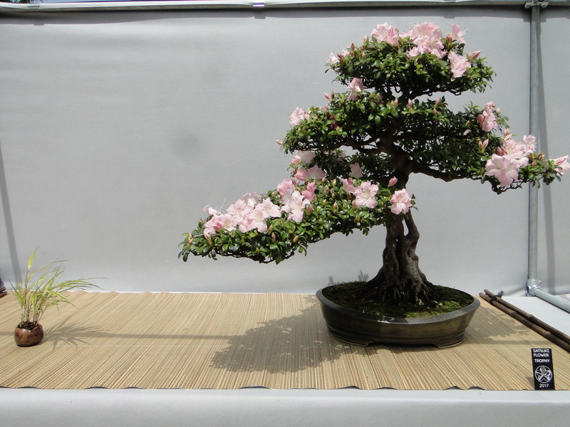 satsuki flower trophy 3  Dsc01545