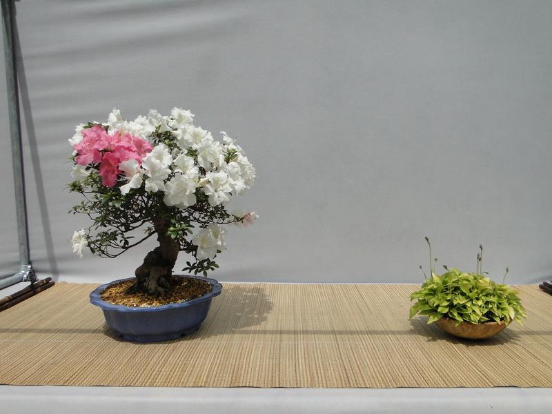 satsuki flower trophy 3  Dsc01549