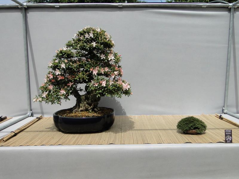 satsuki flower trophy 3  Dsc01550