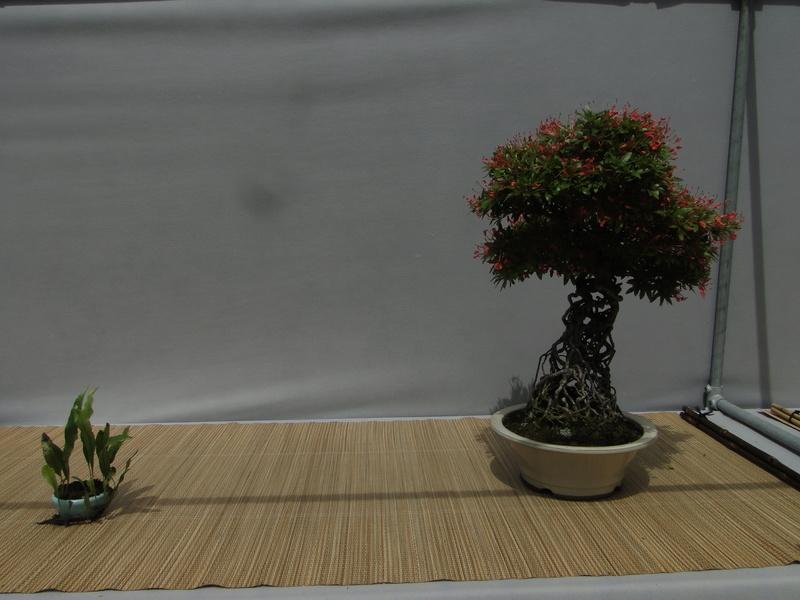 satsuki flower trophy 3  Dsc01551