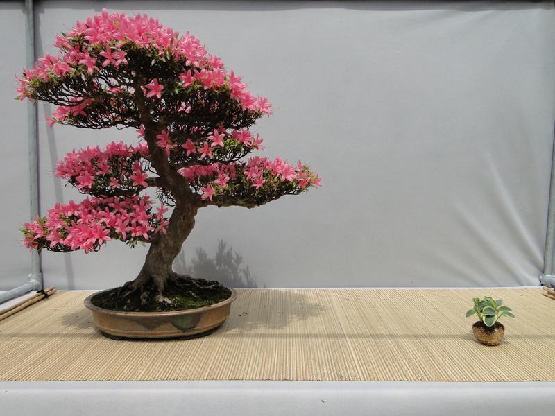 satsuki flower trophy 3  Dsc01552