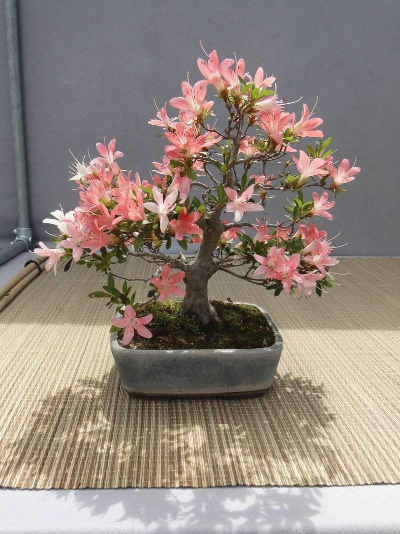 satsuki flower trophy 3  Dsc01559