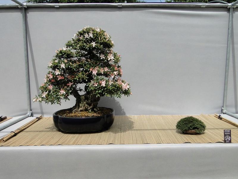 satsuki flower trophy 3  Dsc01569