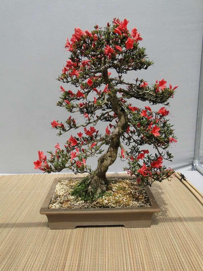 satsuki flower trophy 3  Dsc01571