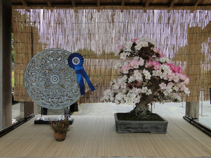 satsuki flower trophy 3  Dsc01577