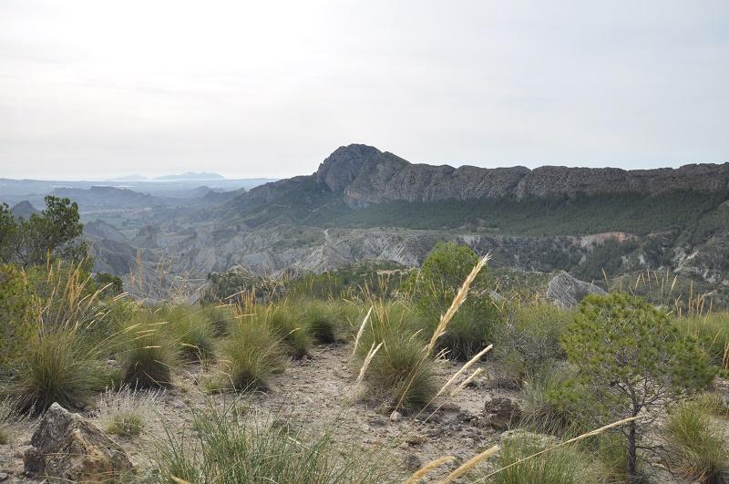 La coalition Charentaise fait les Sierras Andalouse et le désert de Gorafé Dsc_0020