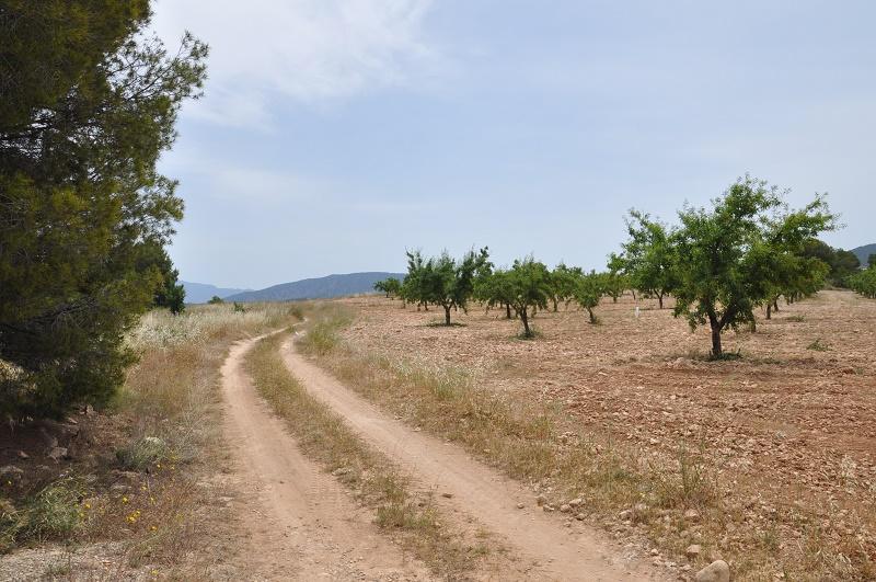 La coalition Charentaise fait les Sierras Andalouse et le désert de Gorafé Dsc_0024
