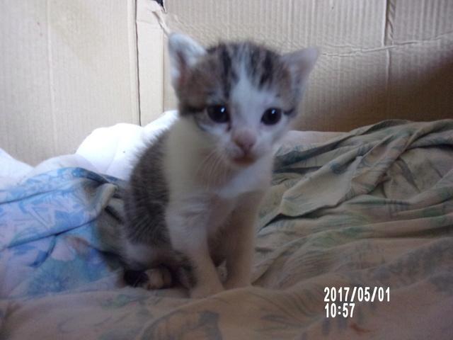 pour les amoureux des chats 106_2110