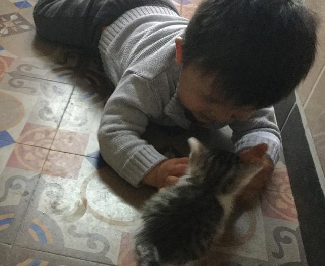 pour les amoureux des chats - Page 2 Img_0435