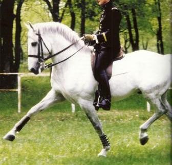 Existe t-il une équitation véritablement juste ? Karl0010