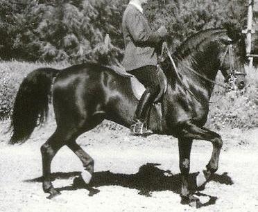 Existe t-il une équitation véritablement juste ? Olivei10