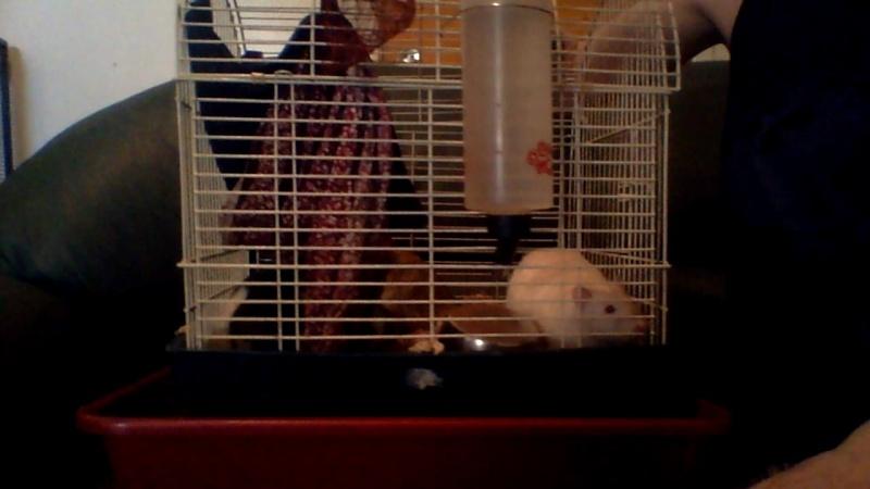 Trop petite cage Image117