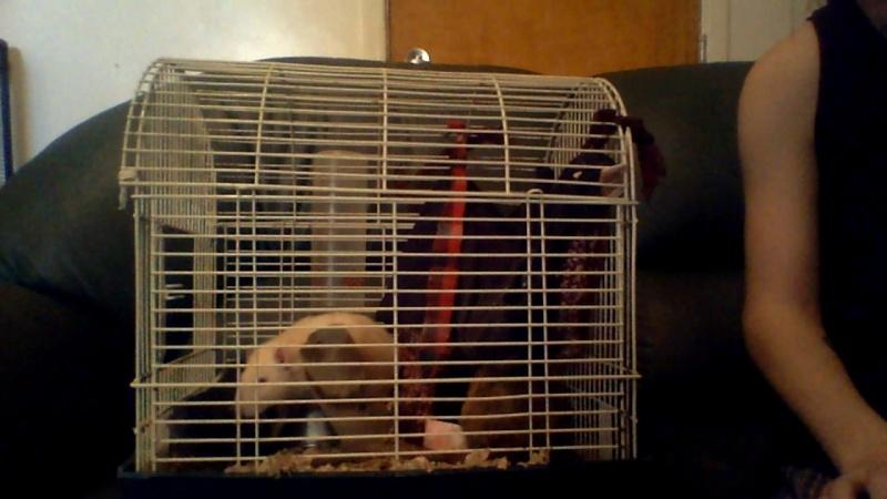 Trop petite cage Image119