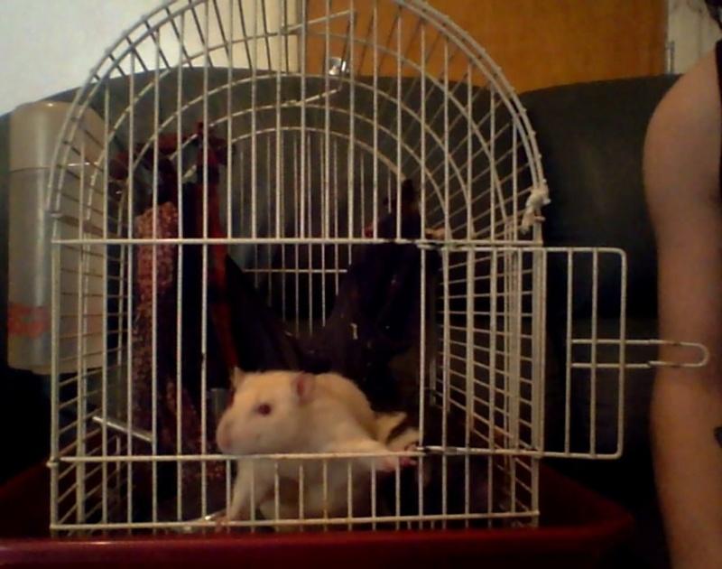Trop petite cage Image120