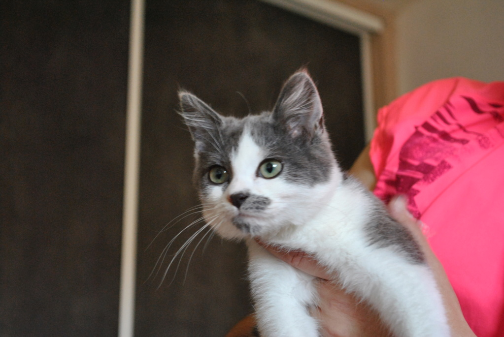 Odette ( ex Odin), chaton de deux mois et demi Dsc_0016